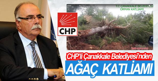 CHP'li Çanakkale Belediyesi'nden Ağaç Katliamı